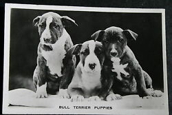 English Bull Terrier Puppies Vintage 1930#x27;s Photo Card VGC