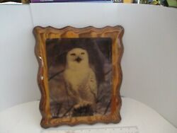 Vintage Wall Decor Owl Lacquered Glossy Wooden Plaque Picture Wall Art 1970s