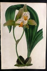 Paxton 1830s Hand Col Botanical Print. Maxillaria Deppei Orchid