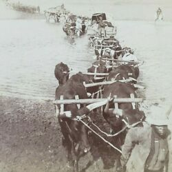 South Africa Viljoensdrif Vaal River Imperial Army Transports Stereoview D411