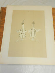 1878 Antique Studer Bird Print/layout Positions Of Bird Feathers