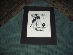 Vintage Hand Drawn Pen And Ink Schnauzer Dog Drawing Signed H.blumenfeld