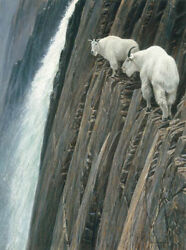 Robert Bateman Sheer Drop –mountain Goats Ap On Canvas Sold Out Limited Edition