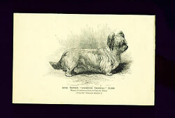 Advertising Print 1894 Skye Terrier Ad for Fanciers Gazette Antique