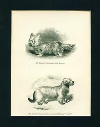 Dog Print 1878 Skye Terrier Dogs ANTIQUE