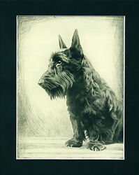 Dog Art Print 1935 Scottish Terrier Dog VINTAGE