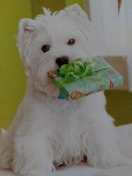 WEST HIGHLAND TERRIER~WESTIE BRAND NEW HALLMARK HAPPY BIRTHDAY GREETING CARD.