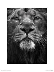 Marina Cano The King Art Print 12 X 16 Inches Officially Licensed