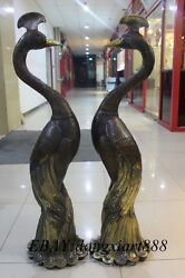 44 Chinese Fengshui Bronze Gilt Peacock Peafowl Fenghuang Bird Juno Pair Statue