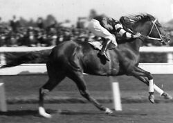 Phar Lap Horse 8x10 Glossy Photo Picture