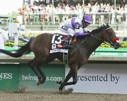 2016 Kentucky Derby Winner Nyquist 8x10 Glossy Photo Picture Image 3