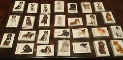 """Lot Of 95 Dog And Cat Breed Photo Magnets 27 Styles Nwt Resale 2 X 3"""""""