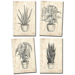 Botanical Illustration Monstera Floral Multi Canvas Wall Art Picture Print