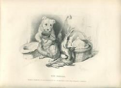 ANTIQUE WHITE TERRIER DOG HUNTING RABBIT HARE GAME MEAT BABY CRADLE OLD PRINT