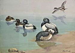Original Duck Painting Of Greater And Lesser Scaup By Allan Brooks C1919 Framed