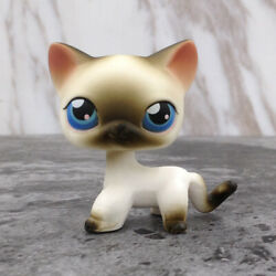 LPS Littlest Pet Shop 5 Shorthair Cat Siamese Kitty Rare Collection Gift In Box