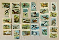 Arm And Hammer Cards Series 4 Set 1-30 Game Bird And Ducks Exc. Condition