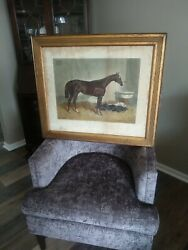 Antique 1840and039s Horse Print The Baron Thoroughbred Colt Equine Ireland Stud