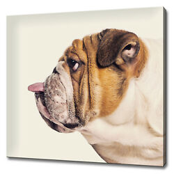 Profile Of English Bulldog Sticking His Tongue Out Canvas Print Wall Art Picture