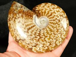 A Big Polished 120 Million Year Old Sutured Ammonite Fossil 357gr