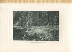 Antique Creek Pond Villeneuve Forest Woods Meadow Young Girl Nature Trees Print