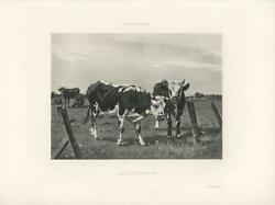 Antique Black And White Cow Cows Corral Farmer Fence Pastoral Victorian Art Print