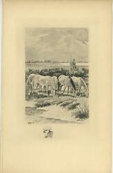 Antique White Horses Grazing Grass Bull Steer Cow Herder Remarque Etching Print