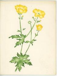 Vintage Yellow Wild Flowers Theorem Hand Painted Card Gladys Brewster Painting