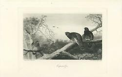 Antique Game Birds Woodcock Heather Cock Hen Sun Tree Branches Old Art Print