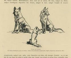 Antique Wild Dogs Pack Adult Puppy Algeria Gustave Guillaument Small Art Print
