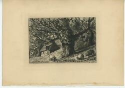 Antique Old Chestnuts Trees Farm House Pigs Pig Woods Original Etching Art Print