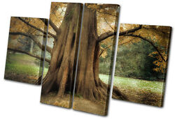 Landscapes Ancient Old Tree Multi Canvas Wall Art Picture Print Va