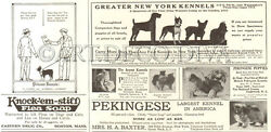 Antique 1922 BOSTON TERRIER Dog Princess Kennels NEW YORK Breeder Ads