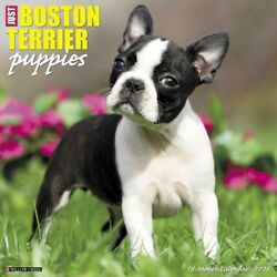 2018 Just Boston Terrier Puppies Wall Calendar  Boston Terriers by Willow Creek