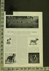 1905 DOG BOSTON TERRIER SHOW CHAMPION ROB ROY KENNEL BREEDER INSERT AD RT79