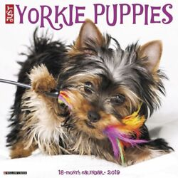 2019 Just Yorkie Puppies 2019 Wall Calendar Yorkshire Terrier by Willow Creek P