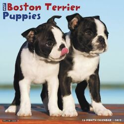 2019 Just Boston Terrier Puppies Wall Calendar Boston Terrier by Willow Creek P