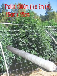 3280and039 X 6.5and039 Bio Grade Trellis Plant Support Outdoor Netting Vine Stems Protect