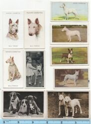 Bull Terrier Dog Pet Canine 10 Different Vintage Ad Trade Cards #4