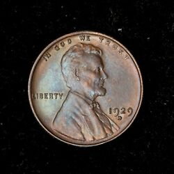 1929-d 1c Lincoln Wheat Cent Penny Bu++ Looks Gem Us Coin