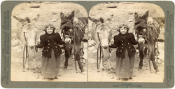 Stereo, Comrades, Little Girl With Two Donkeys, 1894 Vintage Stereo Card - Under