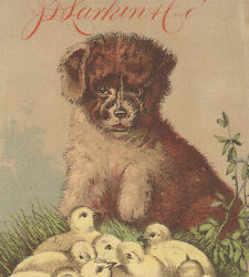 1882 Larkin Cos Boraxine Trade Card,13 Chicks And Sweet Puppy + A Gift Offer V781