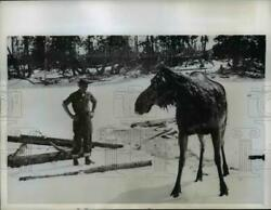 1960 Press Photo George Marek Forest Ranger Saved Moose From Drowning Ontario