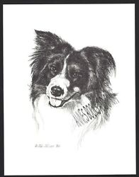 #376 BORDER COLLIE portrait dog art print * Pen and ink drawing * Jan Jellins