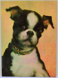 Vintage Boston Terrier Picture Print 5quot; x 7quot; Cute