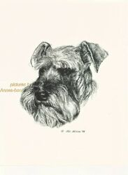 #9 SCHNAUZER uncropped portait dog art print * Pen and ink drawing * Jan Jellins