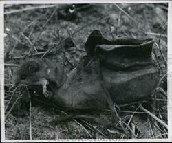 1958 Press Photo A White Footed Rodent Crawls Over Shoe Reminds Of Nursery Rhyme