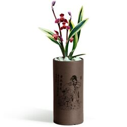 Cymbidium Sinense Orchid Live-red God Lotus-not In Bud/bloom When Shipped