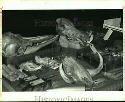 1990 Press Photo Animal skulls amp; fossils at Houston Museum of Natural Science