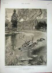 Old Antique Print 1892 Deer Stalking Nipissing Country Ontario Canada Art 19th